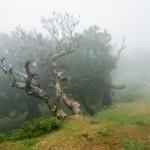 Fanal (til Lagoa, 1105m)